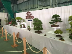 South Staffs  Show Exhibit
